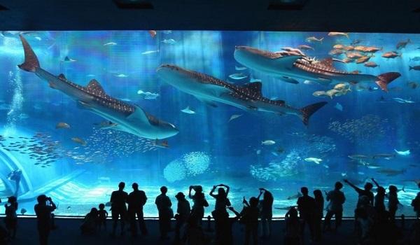 Ngằm nhìn thế giới dưới đáy đại dương khi ghé thăm Sea World
