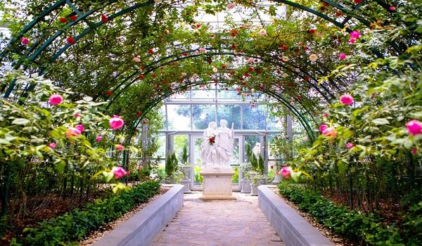 Xiêu lòng trước vẻ đẹp đầy kiêu sa của Vương quốc hoa hồng